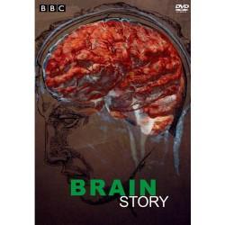 داستان مغز