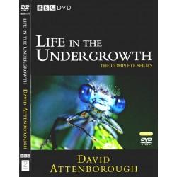 دنیای حشرات