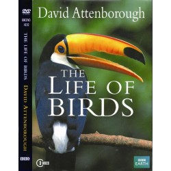 زندگی پرندگان