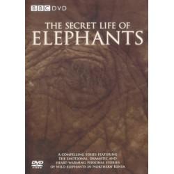 زندگی فیلها