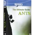 مورچهها