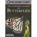 سفر باورنکردنی پروانهها